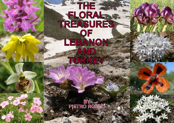 Floral Treasures of Lebanon and Turkey by Pietro Roseo