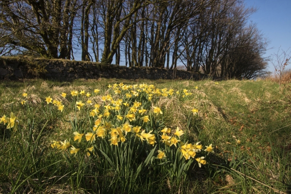 Plant-hunting in Southern England: Moving off the Chalk by Jon Evans