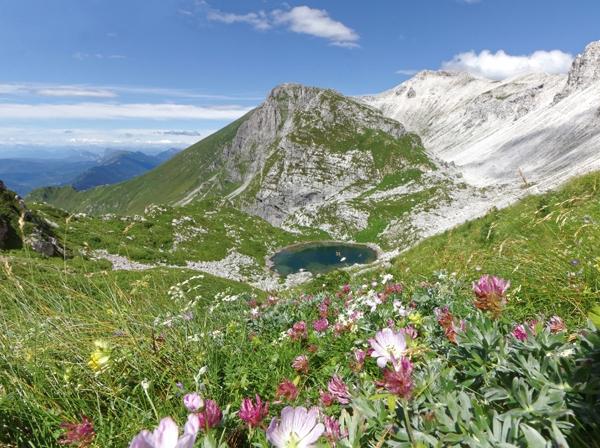 Alpine Flowers of Slovenia by Graham Poynter