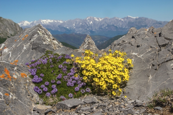 The Picos de Europa at the end of May - Part 2 by Jon Evans