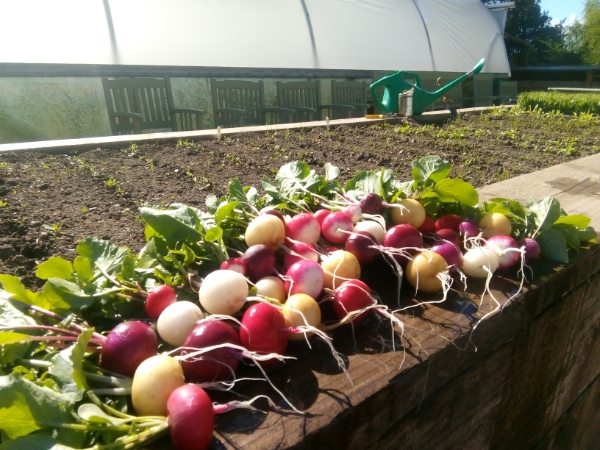 Growing your own fruit, veg and herbs Workshop