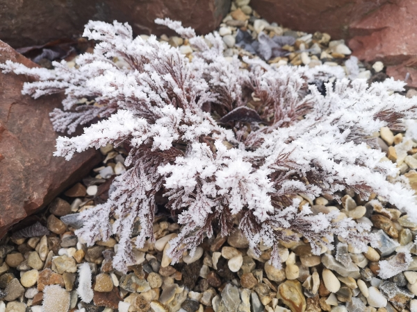 Winter gardening workshop: important winter jobs and garden planning