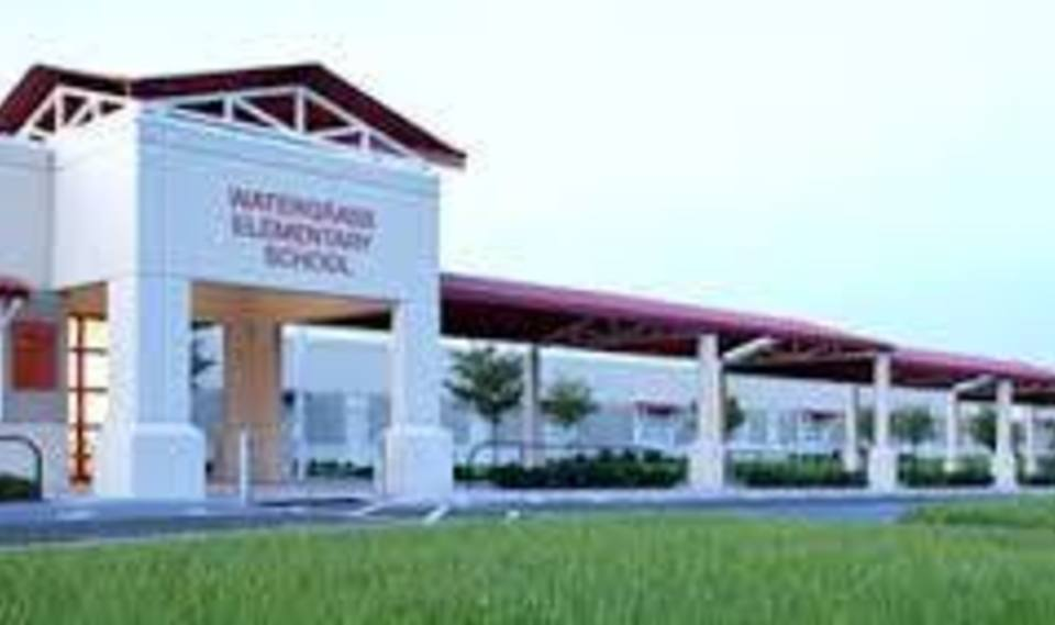 Large watergrass elementary