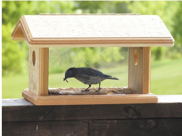 Bluebird Feeder Collection Great Prices Backyard Chirper