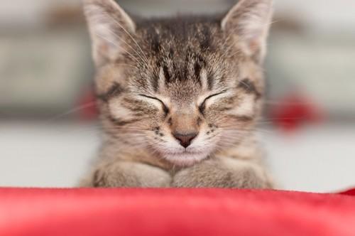 cat-2720778_640.jpg