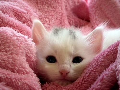 kitten-227009_640.jpg