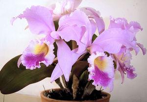 800px flor de mayo