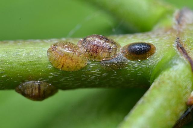 800px scale insects %287244837120%29