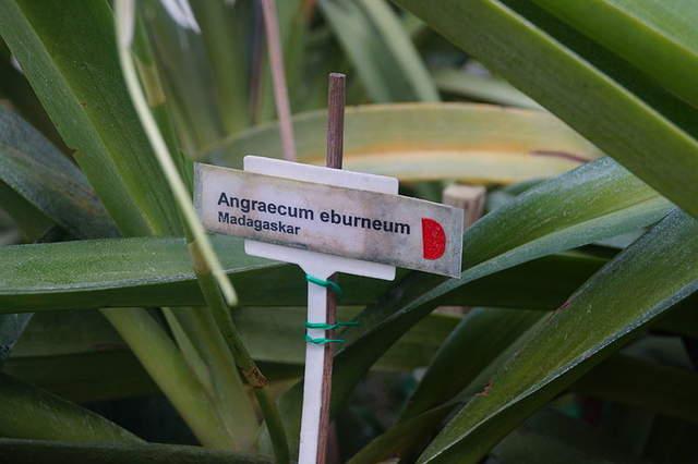 800px ogr%c3%b3d botaniczny uj w krakowie 053