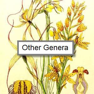 Other genera