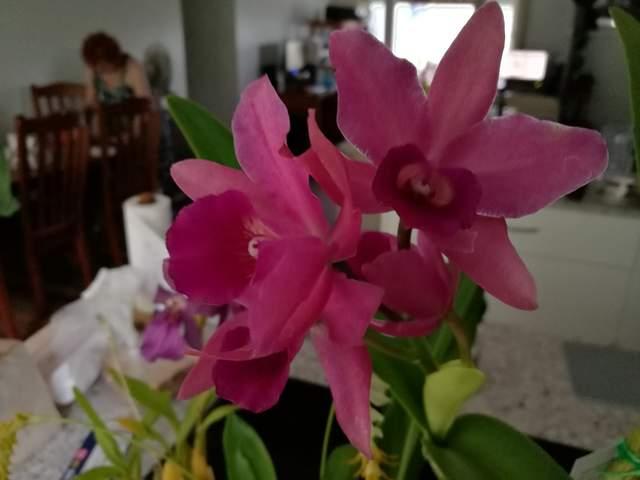 Lc roman bouquet