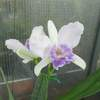 Blc biltmore's blue ridge 012420 %282%29
