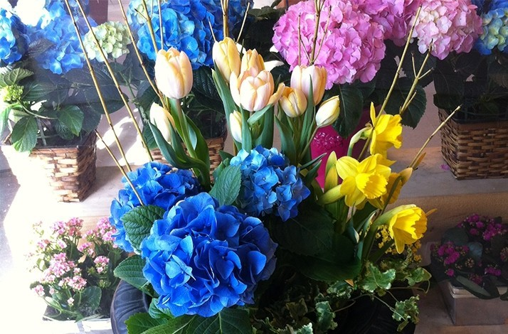 Develop your green thumb with help from Edgewood Florist: In
