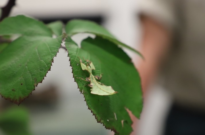 A Bug's Life: Behind the Scenes of the Insect Habitat with