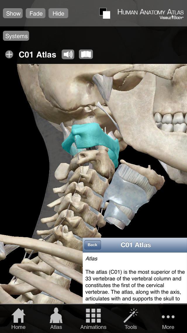 Human Anatomy Atlas SP – Free 3D Anatomical Models of the Human ...