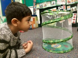 Observing caterpillars