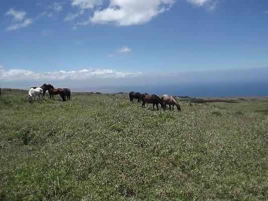 90 Kohala Ranch Road, KAMUELA, 96743 Primary Photo