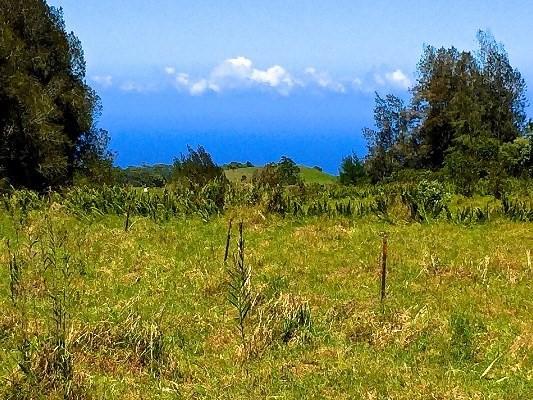 South Kahana Drive, HONOKAA, 96727 Primary Photo