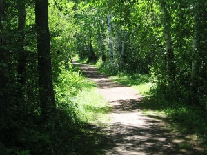 Wooded Trail at Bluegill Bay County Park by Dan Belter