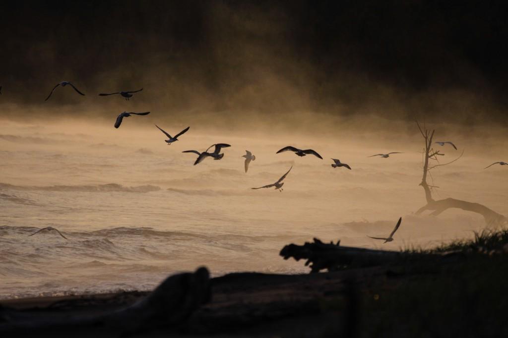 Dawn Gulls Wisconsin Point by Cynthia Bridge