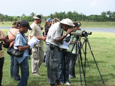 Birding at Gachette Reservoir, Guadeloupe