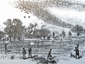 """Pigeon Shoot Historic Illustration from """"The Illustrated Sporting and Dramatic News, July 3, 1875"""