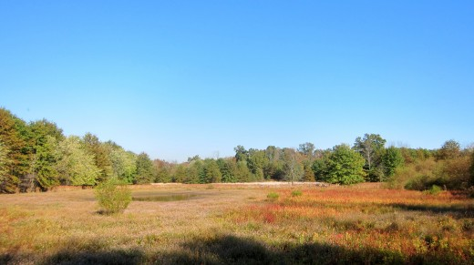 Glenhurst Meadows looking east from the Brookside Trail (photo by Jonathan Klizas).