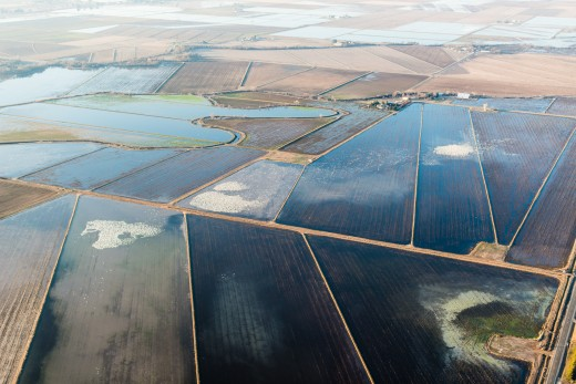 An aerial view of Snow Geese in a flooded rice field, Central Valley, CA. Photo courtesy TNC and Drew Kelly.