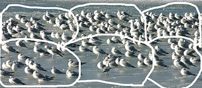 Gulls3