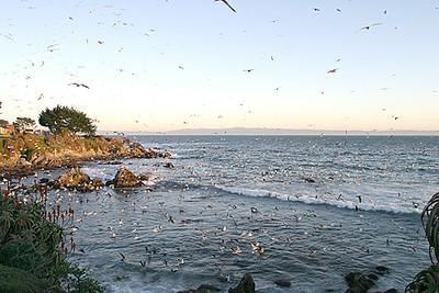 Gulls flock on the shoreline
