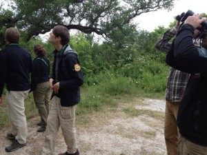 Fig. 4. Team Sapsucker tried to avoid being distracted by the many colorful Scarlet Tanagers at High Island. That's Tim Lenz, our programmer, front and center. Tim found us Cerulean, Blackburnian, and Blue-headed Vireo here, among many others during the day.