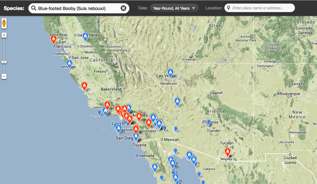 Blue-footed Booby invasion into California as of 15 September 2013.