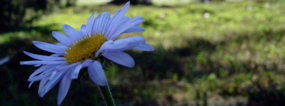 Wild%20flower