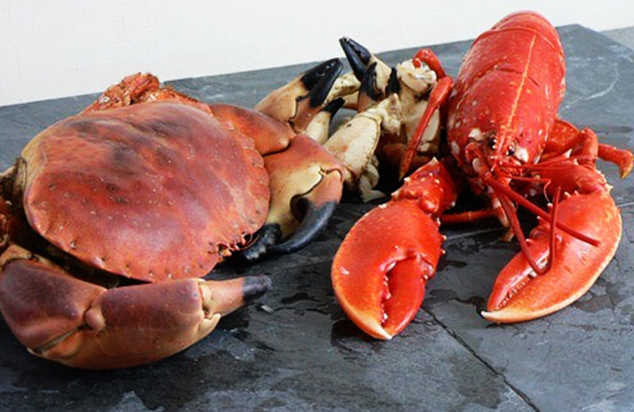 tiree lobster and crab