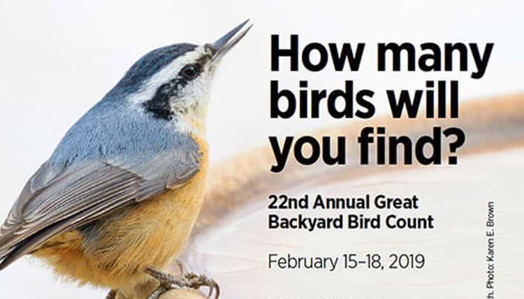Audubon Great Backyard Bird Count, Prep Session