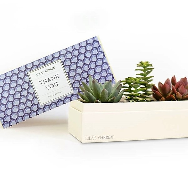 Original Jewel 'Thank You' Succulent Box