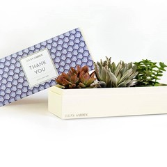 Deluxe Mystery 'Thank You' Succulent Box