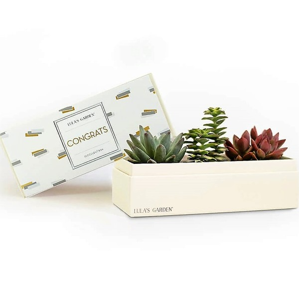 Original Jewel 'Congrats' Succulent Box
