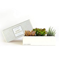 Deluxe Garden 'Happy Holidays' Succulent Box