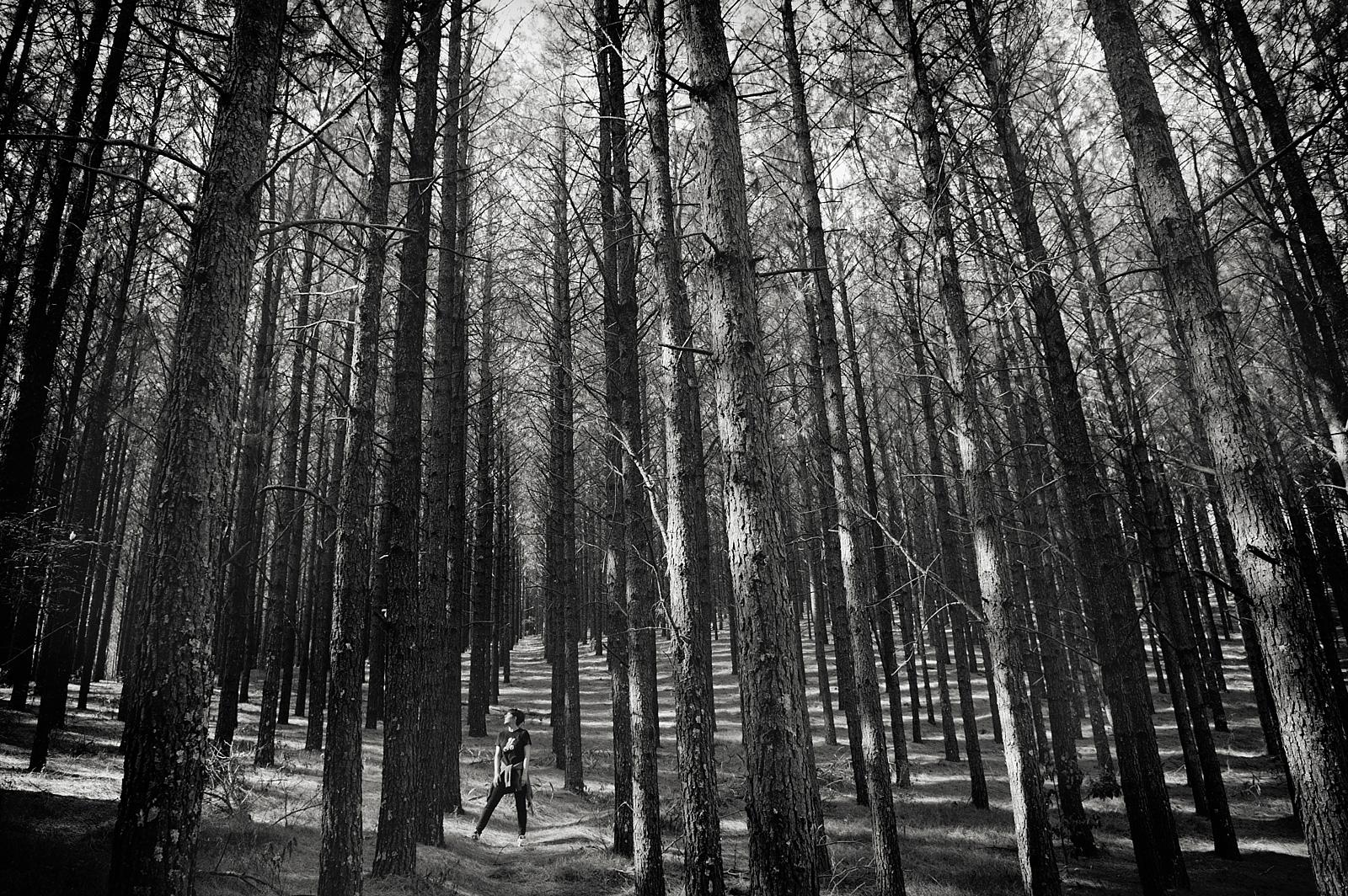 Sycamore-Avenue-Top-KZN-Photographer-Jacki-Bruniquel-01