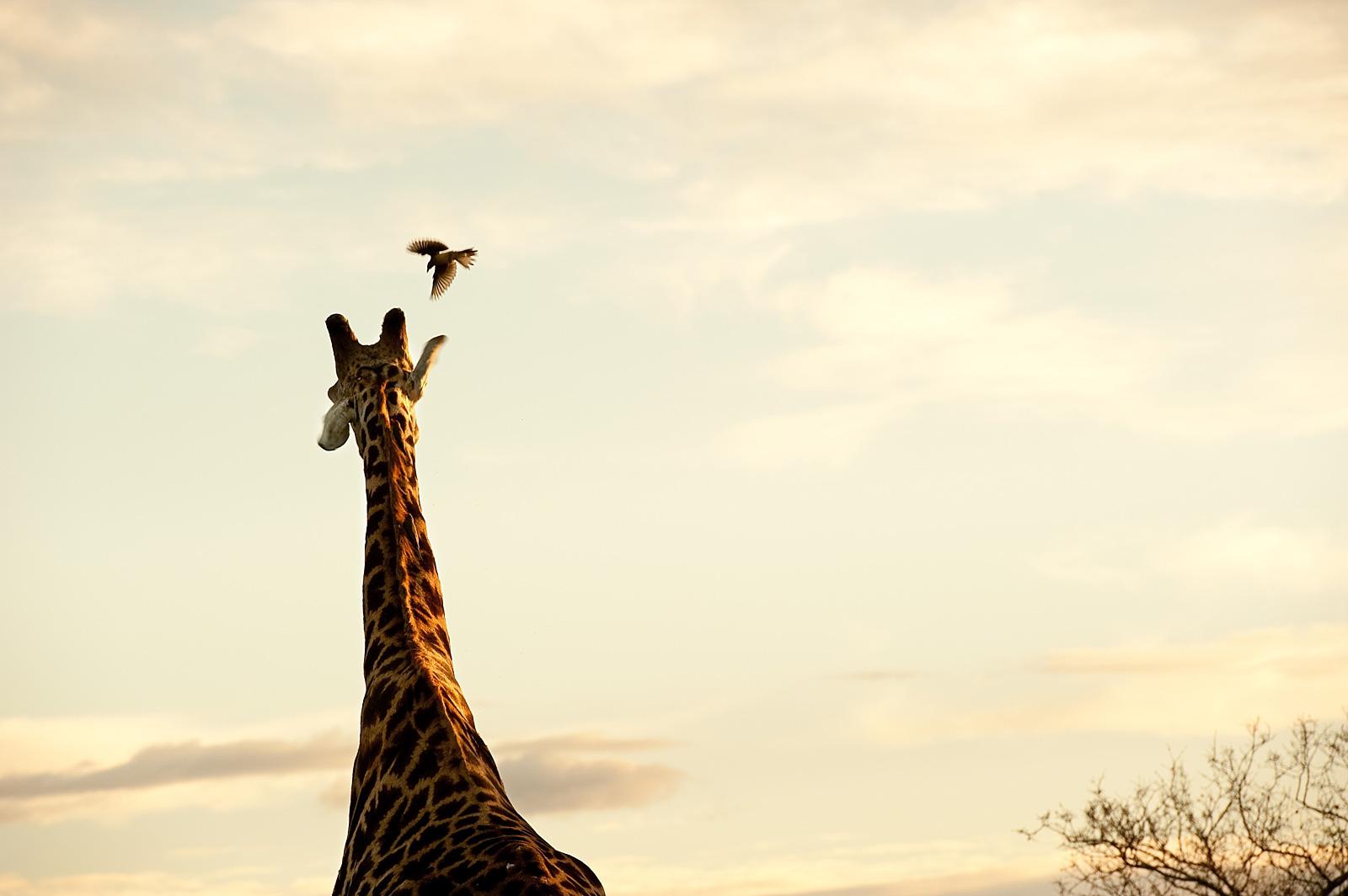 Jacki-Bruniquel-South-African-Photographer-Travel-Photos-01