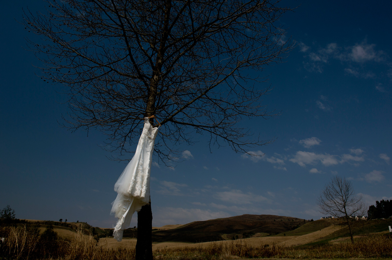 Wedding dress in tree