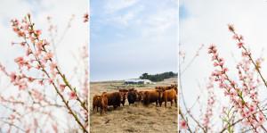 Netherwood in Spring