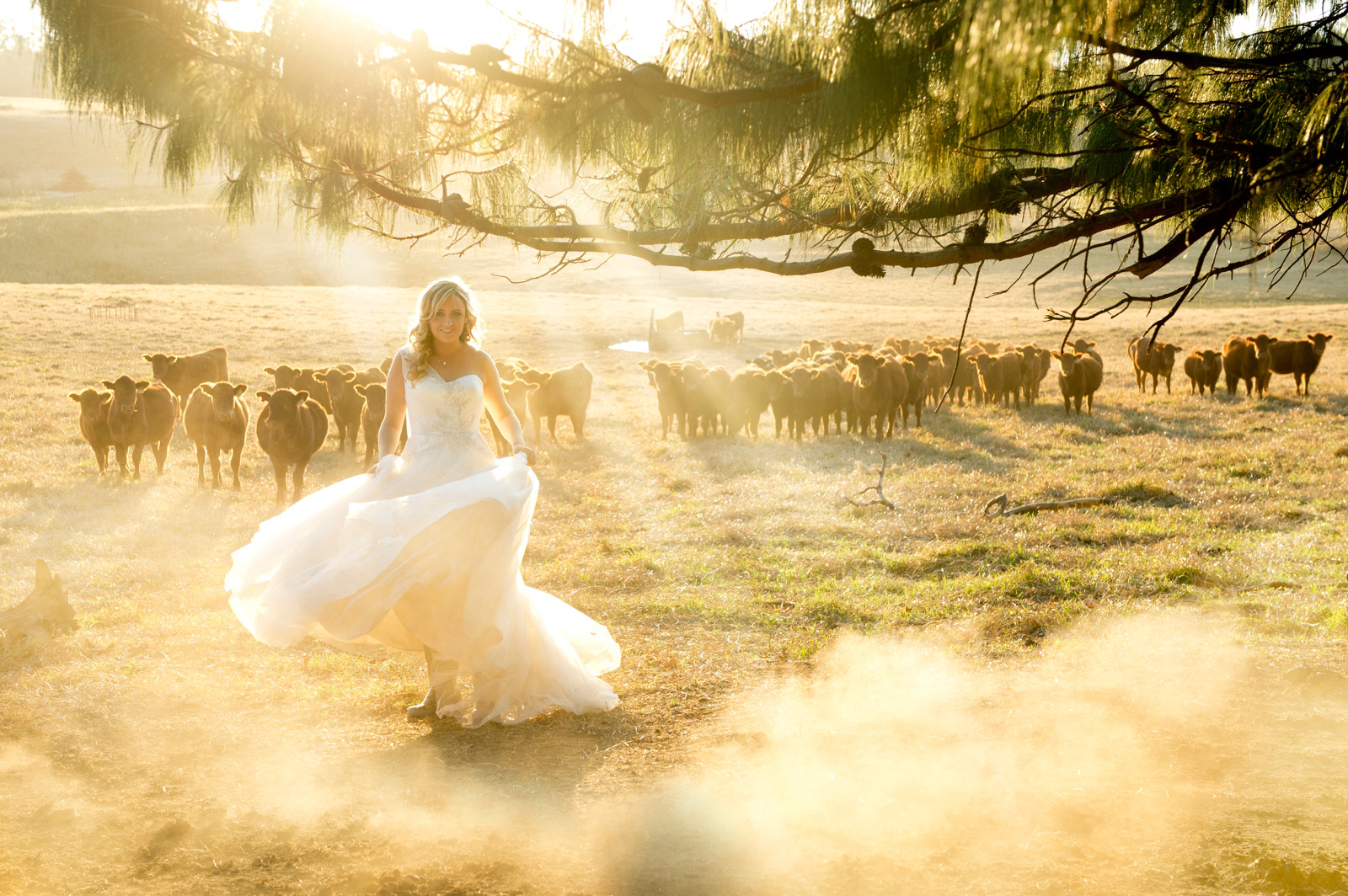 bride with cattle