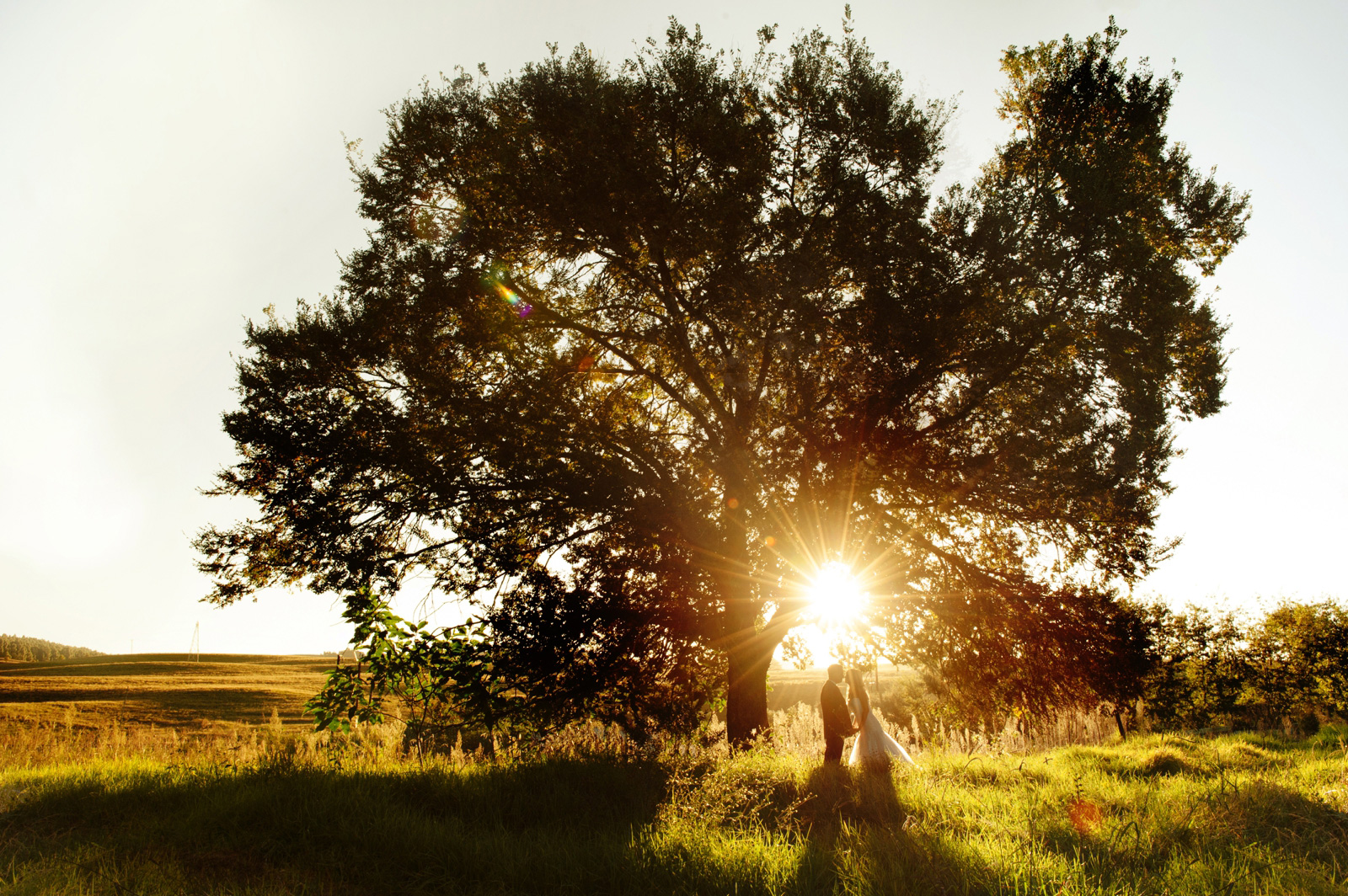 Midlands wedding bride and groom under a tree