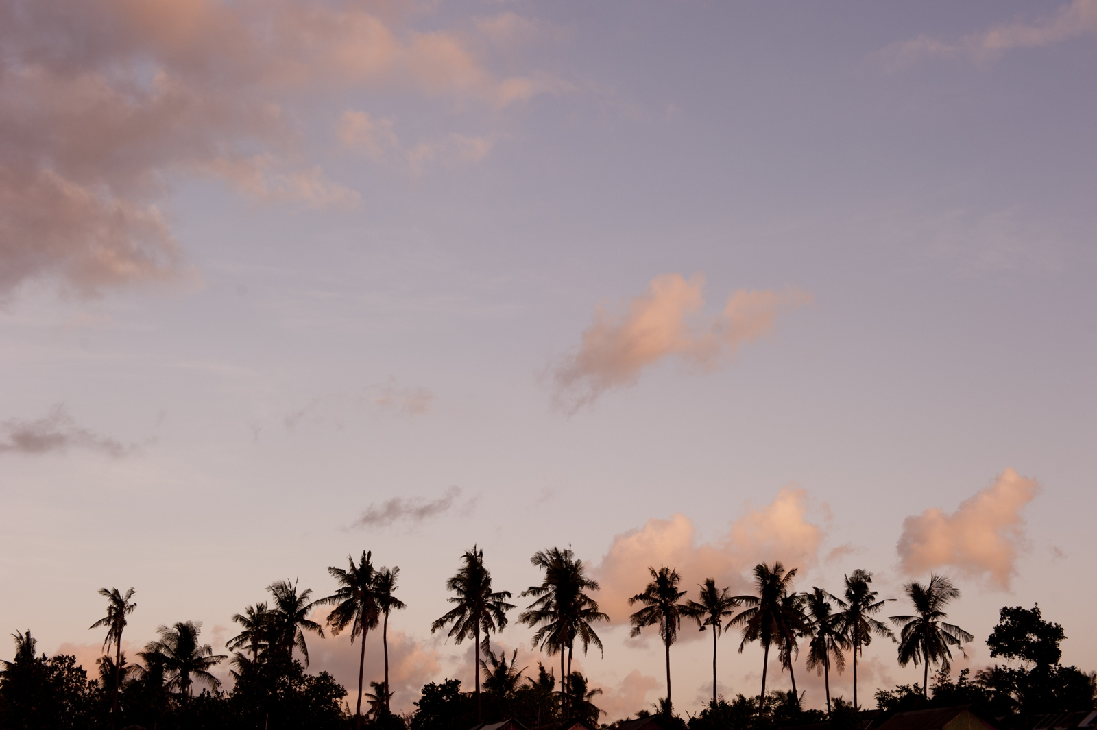 Coco nut trees at sunset