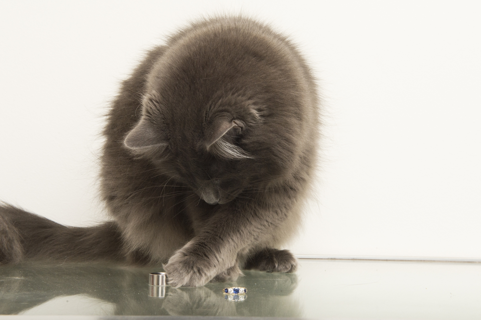 Cat with rings