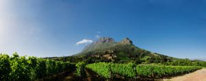 Zorgvliet vineyards