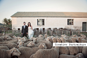 Wedding couple with sheep in the karoo
