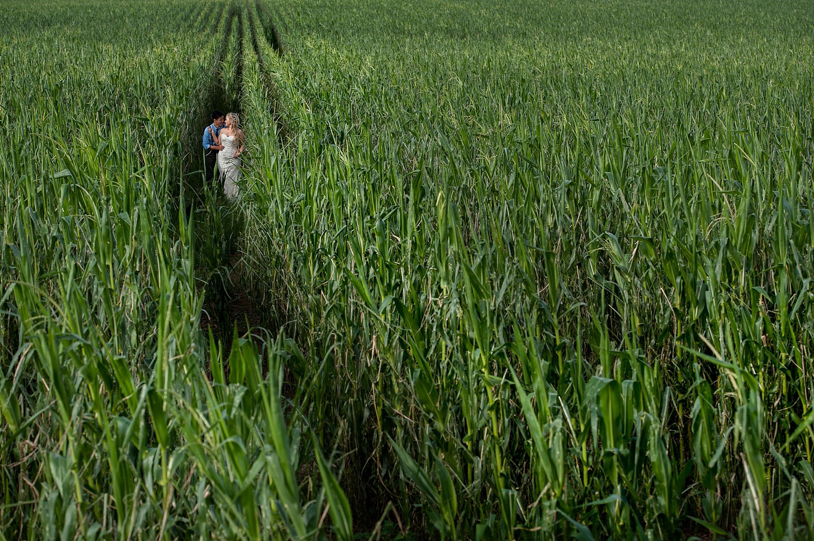 Wedding Couple in a corn fields